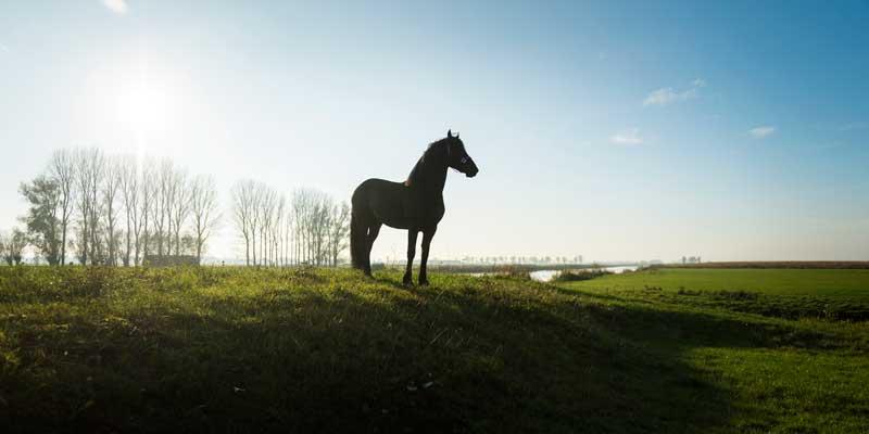 foto-Kees-van-de-Veen